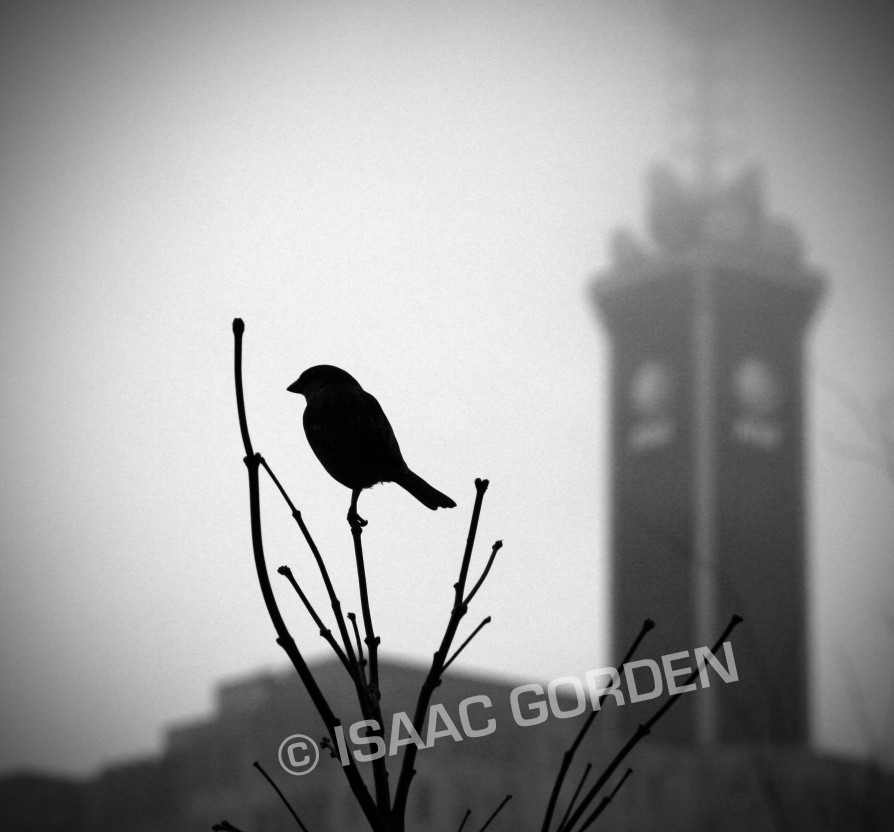 Bird by Dreams-Made-Flesh