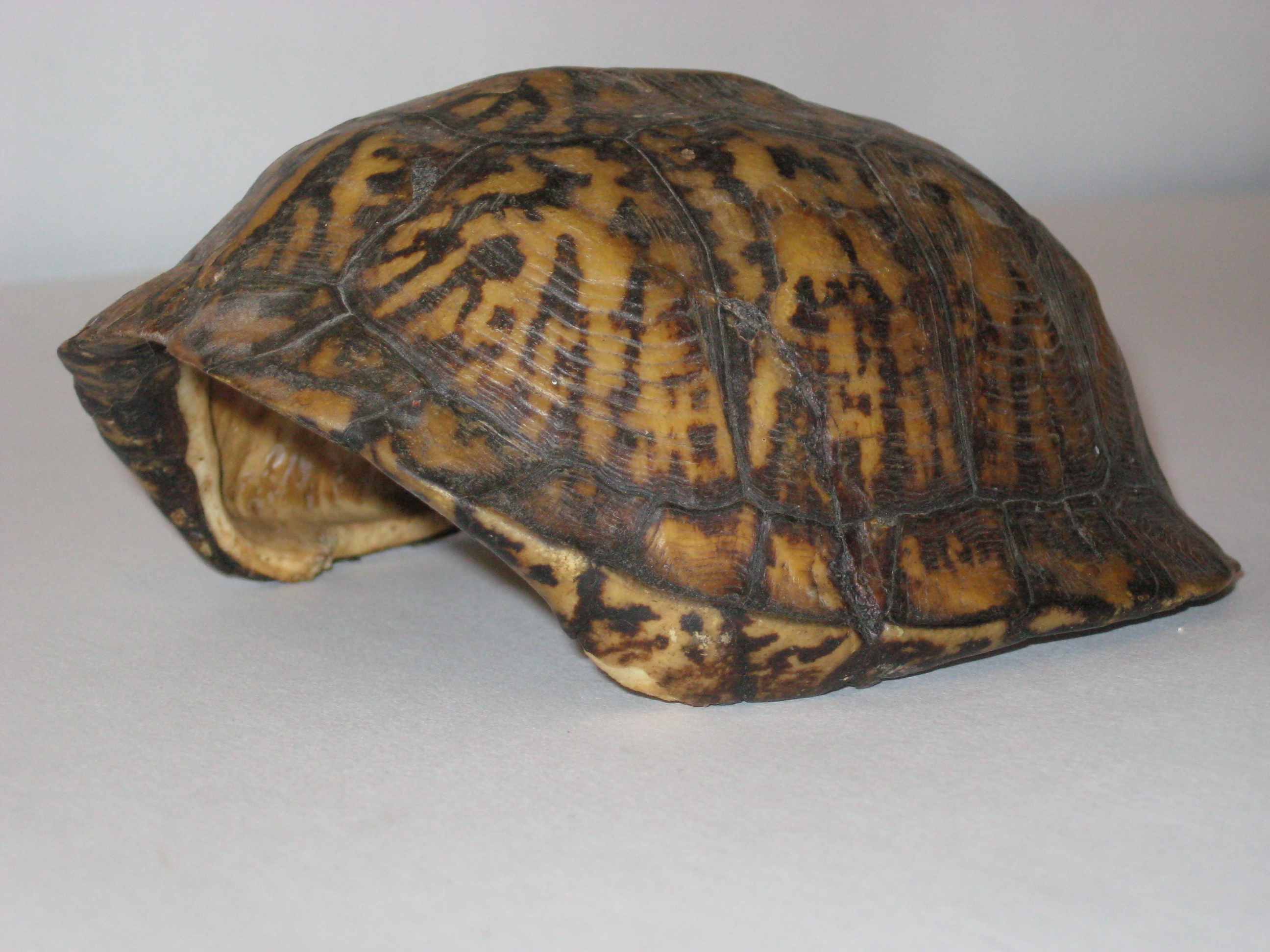 Tortoise vs Turtle - Science and Research