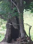 Fairy Tree 3 by markopolio-stock