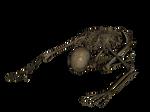 Skeleton - Worshiping