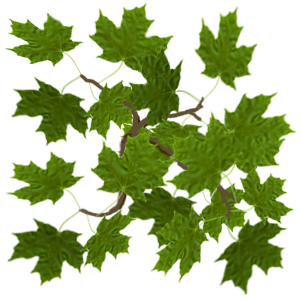 Texture - Vue Maple Leaf by markopolio-stock on DeviantArt