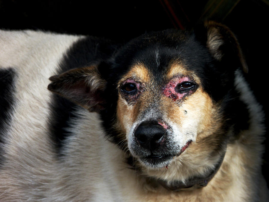 stop animal abuse! by yo04