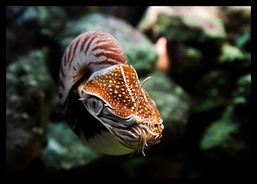 Nautilus by sputnikpixel