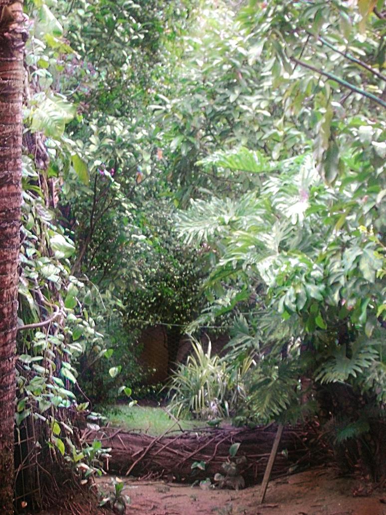 Backyard Jungle by adox-tnw