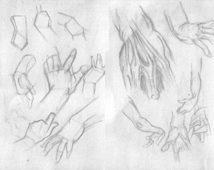 anatomy study 02 by woods78