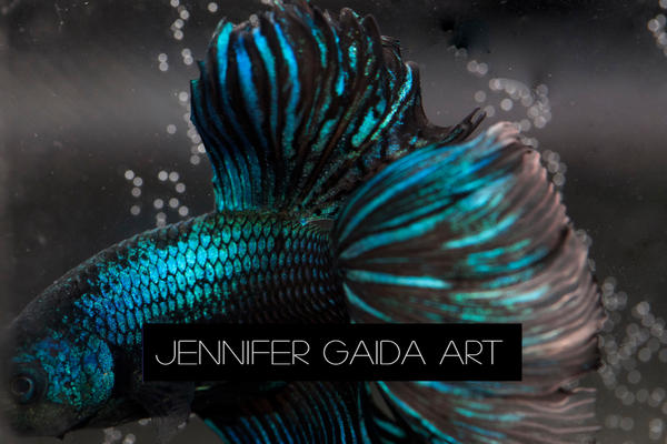 Jennifer Gaida Art: The Betta Project by JenniferTheFirst