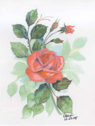 Jerry's Roses