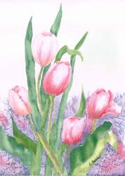 Tulip Infusion