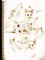 Cat Sketches by bbiru