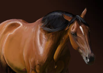 Bay Horse by ShadiKSilence
