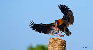 Vertical Landing by Grouper