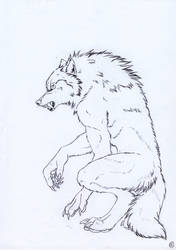 werewolf by SaintWolfOfEden