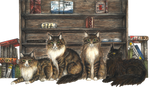 Maine Coons Peggy-Pelkey-PDQ-Josy by Mohn-Fuchs