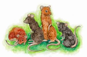 Mice parade by Mohn-Fuchs