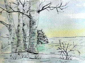 Snowscape: Birch Grove