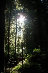 Forest Walk by Angelleo76