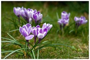 Spring, Spring by SeaWhisper