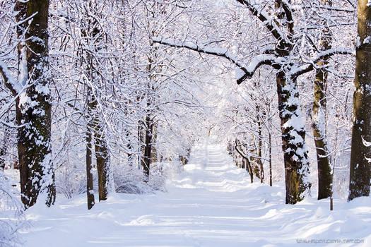 Warsaw Winter Wonderland 4