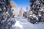 Warsaw Winter Wonderland 5