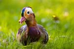 Duck In Flowers