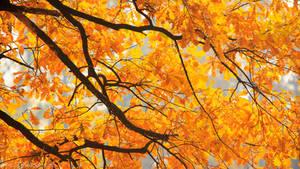 Wallpaper: Paint It Orange by SeaWhisper