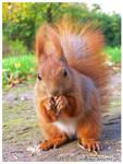 Behind Squirrel Eyes 2