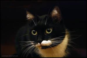 Cat will be cat by SeaWhisper