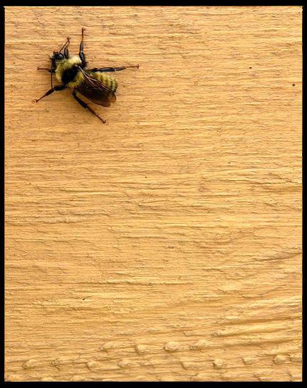 honeypies