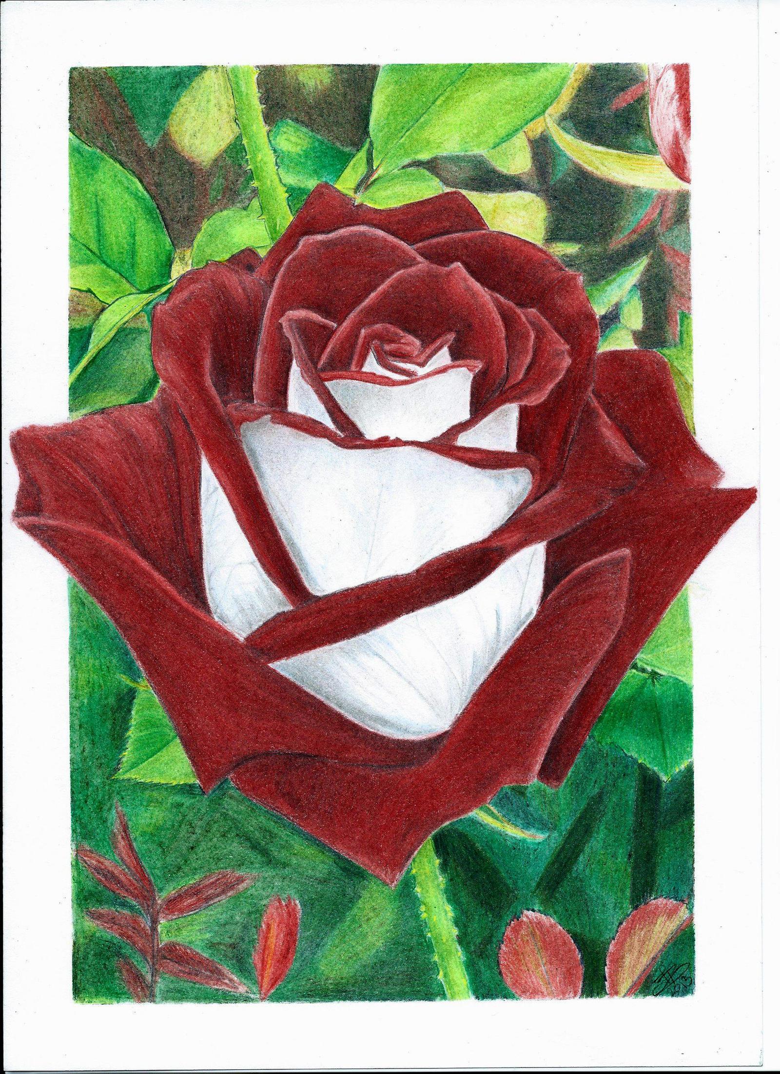 osiria rose by darcartdk on deviantart. Black Bedroom Furniture Sets. Home Design Ideas