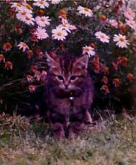 My Cat Didda by RaspberryFanta