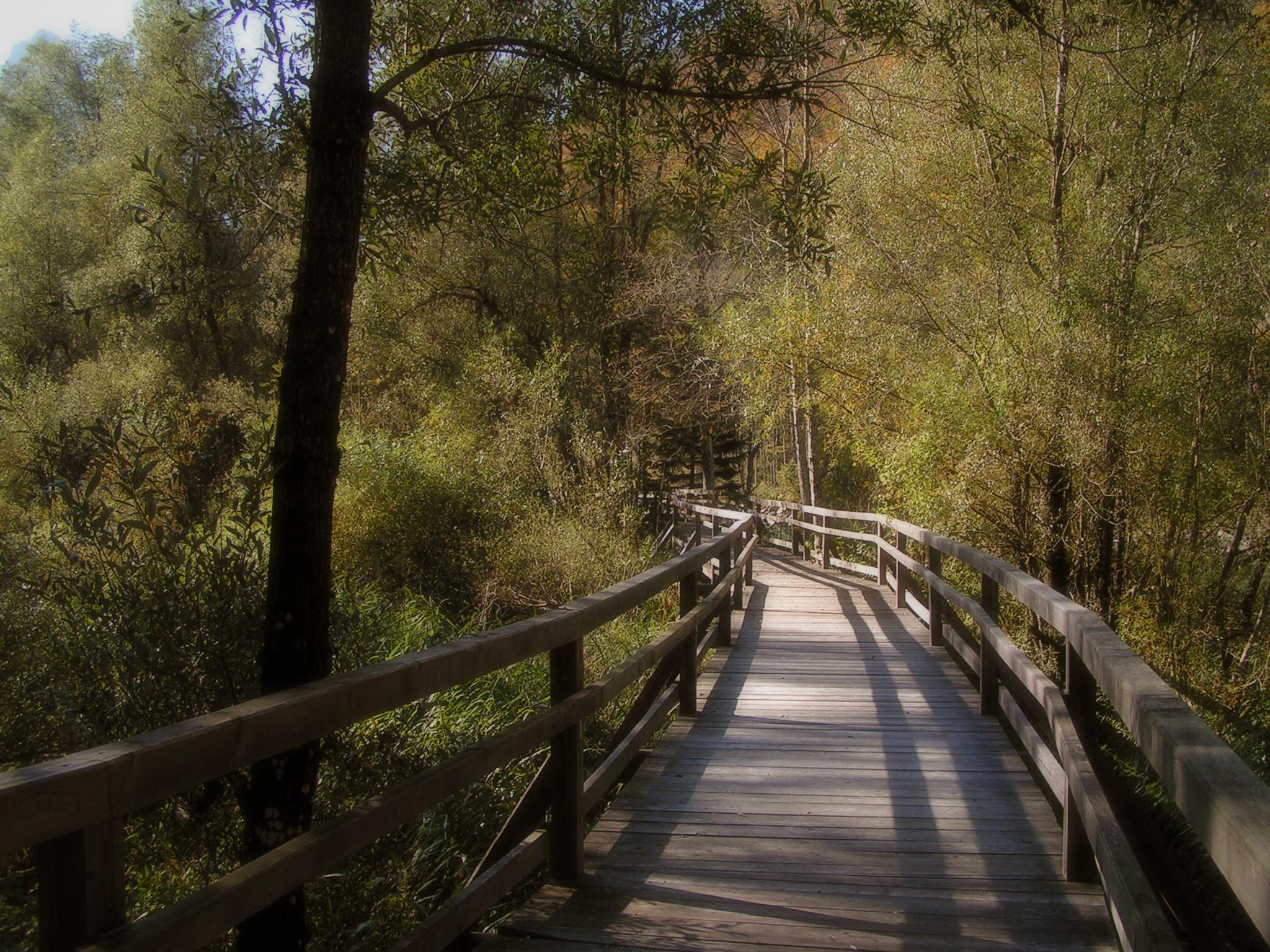 Bridge by darkrose42-stock