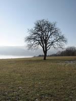 Tree by darkrose42-stock