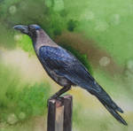 Crow with watercolor