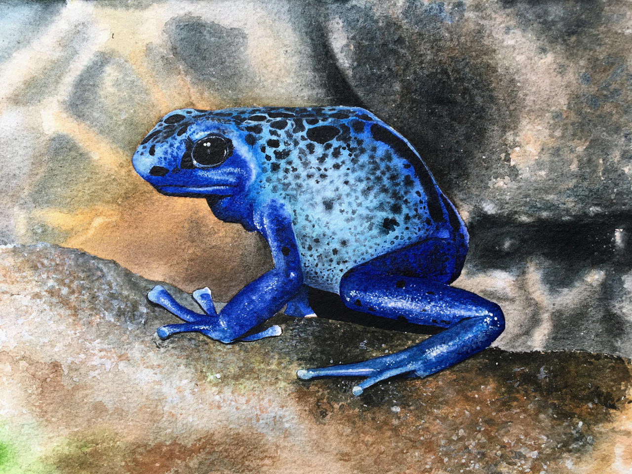 Dendrobates azureus (Poison dart frog)