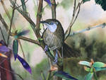 Spiny_Babbler_made_with_watercolor