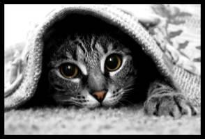 Ninja Cat by torchdesigns