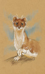 A Stoat by Lychnobia