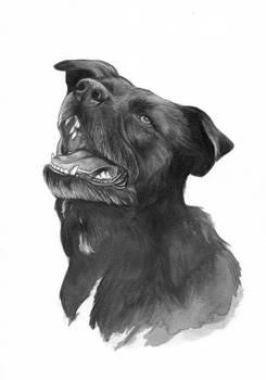 Commission: Pet Portrait