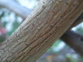 branch by TextureTheif