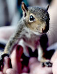 Baby Squirrel 2-redited