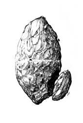 Rock Anatomy