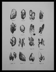 Rock Organisms