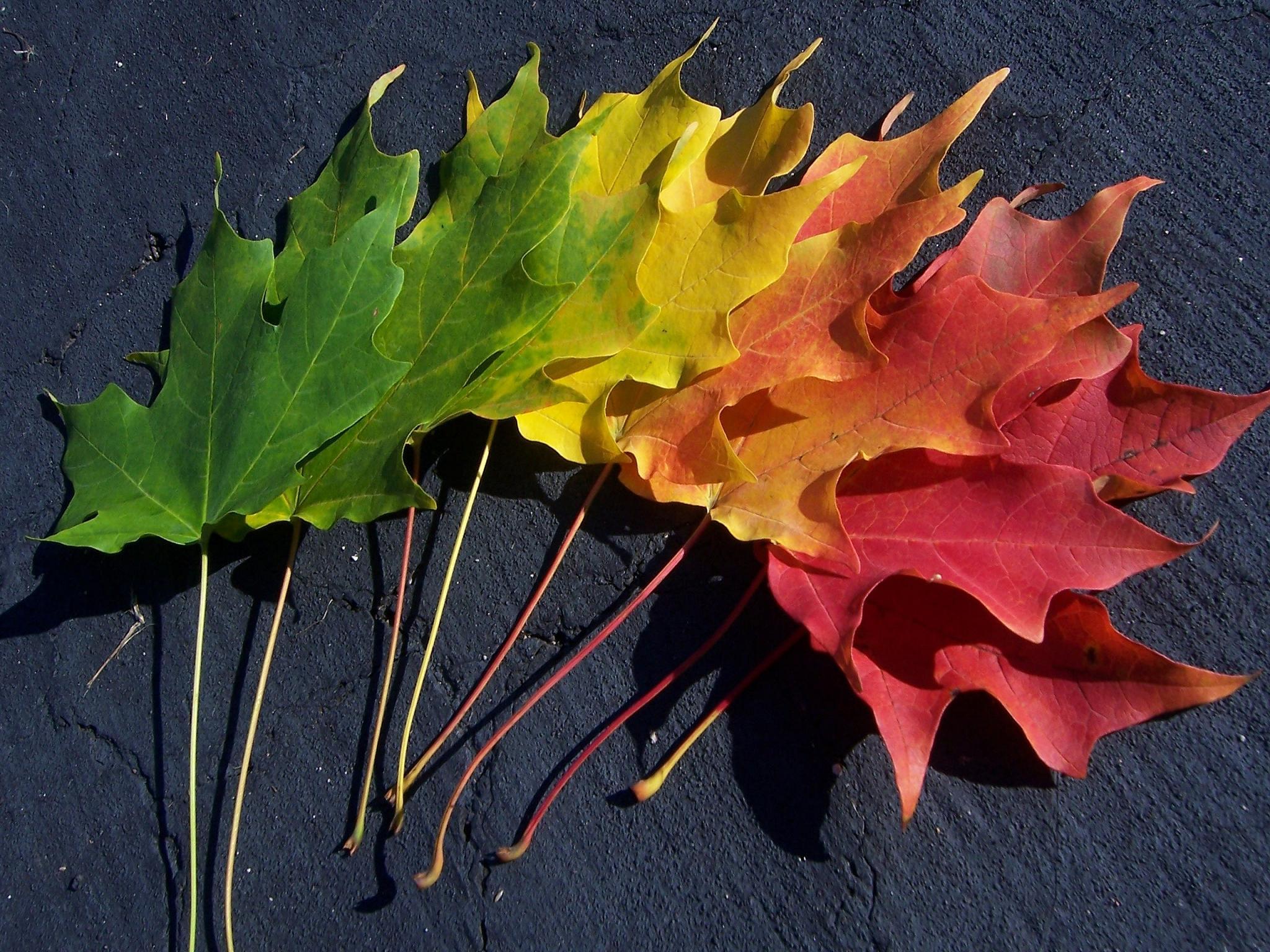 Spectrumn of Autumn Wallpaper by thetangyzip