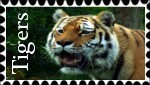 Tigers Stamp by In-the-picture