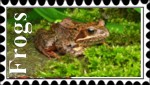 Frogs Stamp by In-the-picture