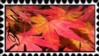 Autumn Fall Stamp by In-the-picture