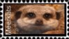Meerkats Stamp by In-the-picture