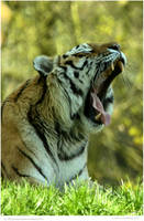 Mighty Roar by In-the-picture