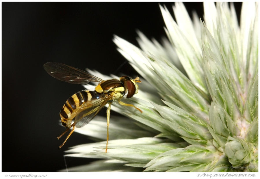 Landing Gear by In-the-picture
