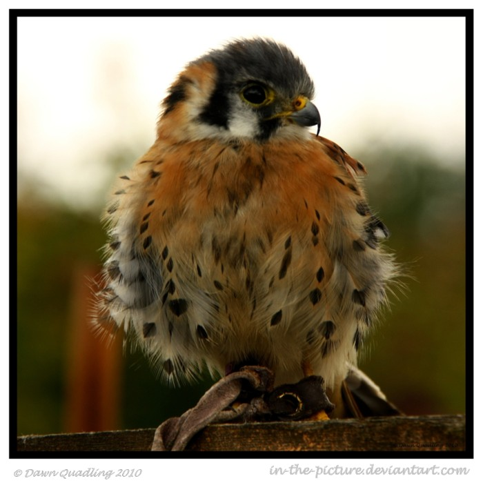Pint sized Ferocity by In-the-picture
